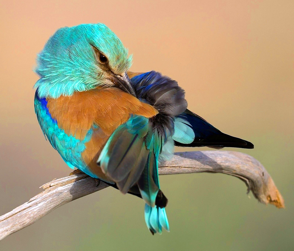 beautiful-turquoise-bird-wide