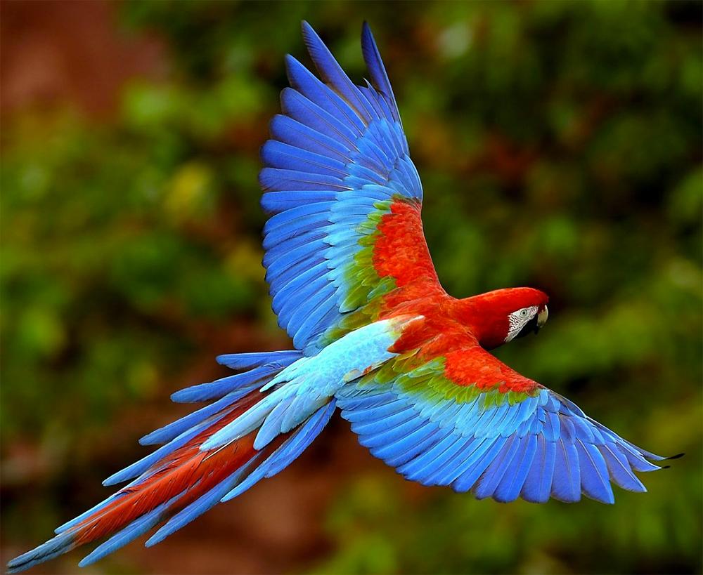 colorbird2