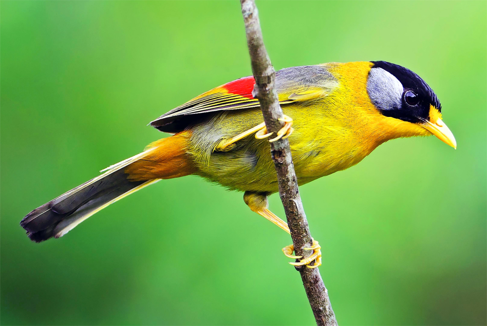 colorbird3