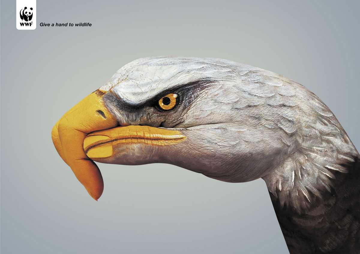 wwf-eagle